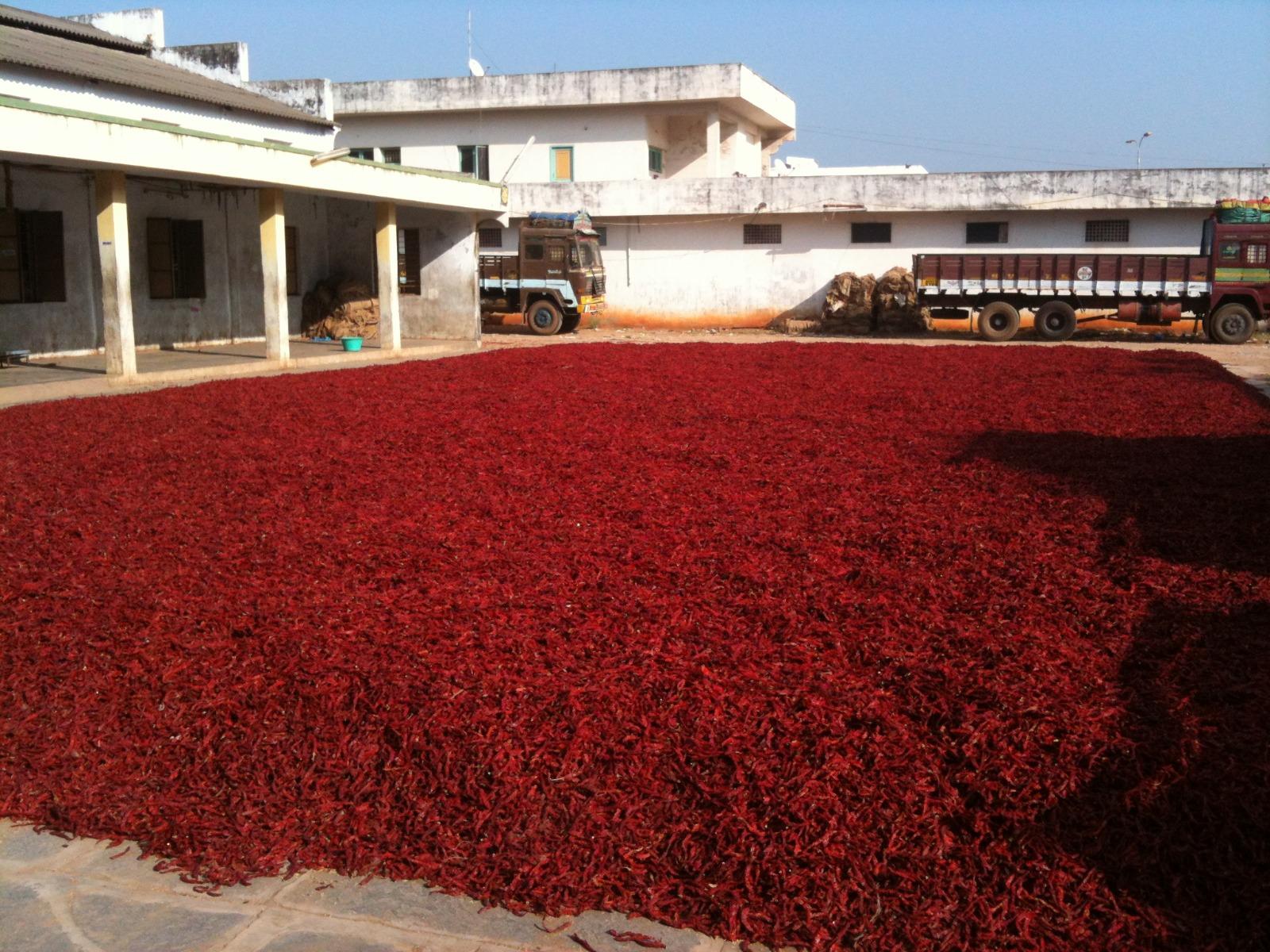 Guntur - Asia's largest Chilli Market